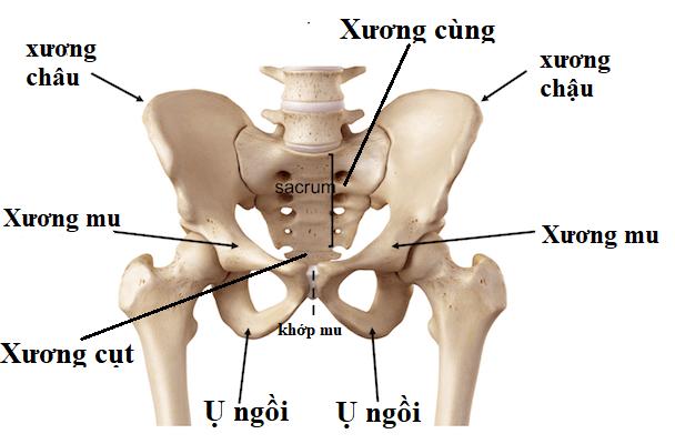 Tại sao viêm vùng chậu gây đau lưng? 2