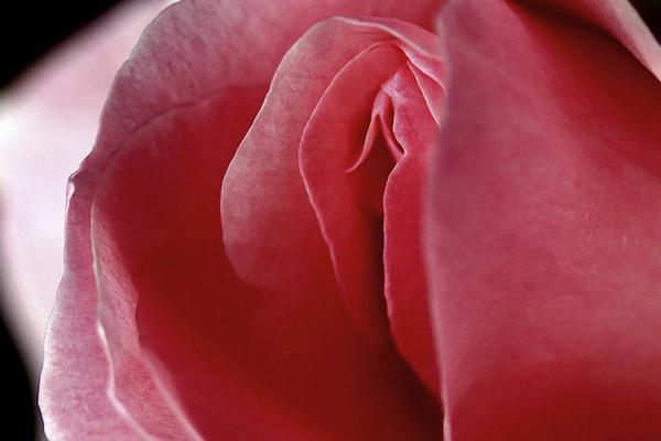 Mật ong làm se khít âm đạo và sáng hồng da vùng kín 1
