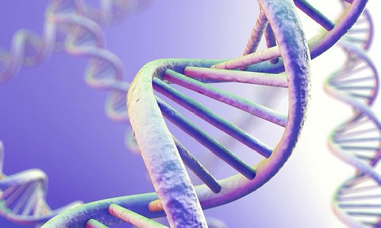 Ung thư cổ tử cung có di truyền không? 1